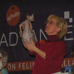 Sphynx de Ebano siendo examinada en la Exposición de Valladolid de 2008